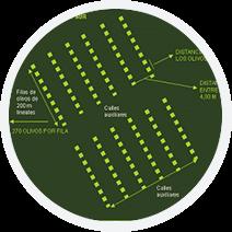 Oficampo - Diseño de Plantaciones