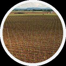 Oficampo - Plantaciones