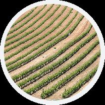 Oficampo - Reestructuración y Abandono de Cultivo